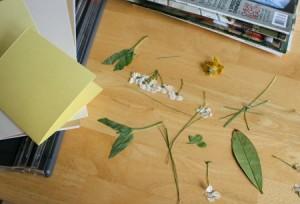 открытка с живыми цветами